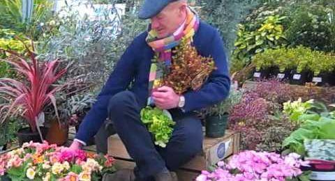 Chelsea Flower Show celebrates 100 years